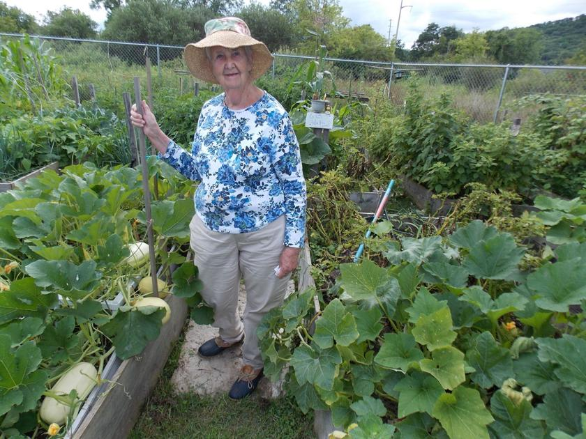 Olean Food Pantry garden is the best yet, thanks to help from the ...