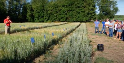New barley for New York farmers
