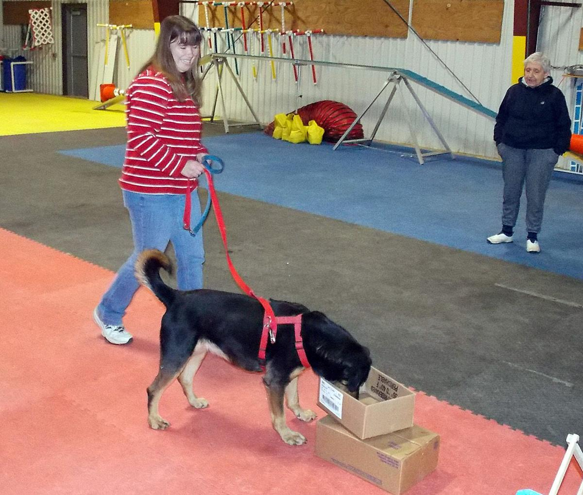 Olean Class Cars: SPCA Shelter Dogs Follow Their Noses