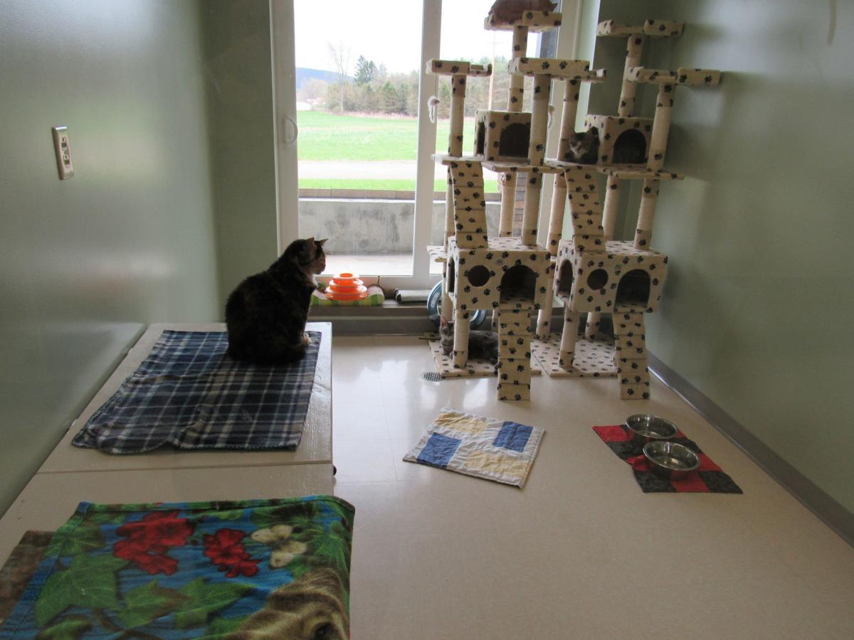 New Belmont SPCA shelter exceeds capabilities of original