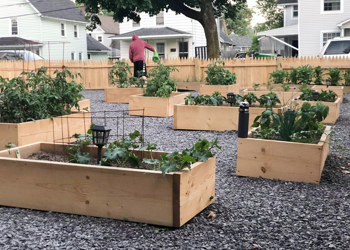 Olean residents reap rewards of Healthy Families community gardens