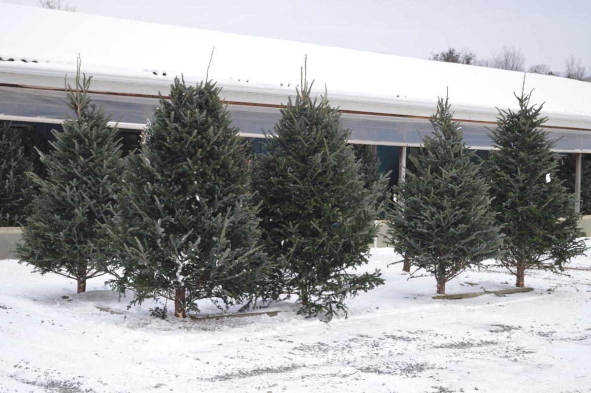 Oh, Christmas Tree | News