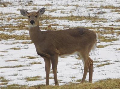 Deer season extended