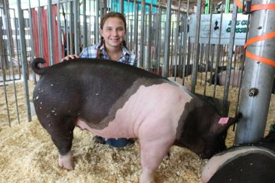 Cattaraugus County 4-H Market Animal Auction is going online