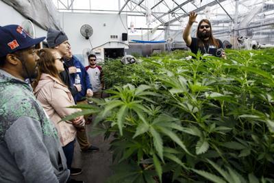 Marijuana in Colorado
