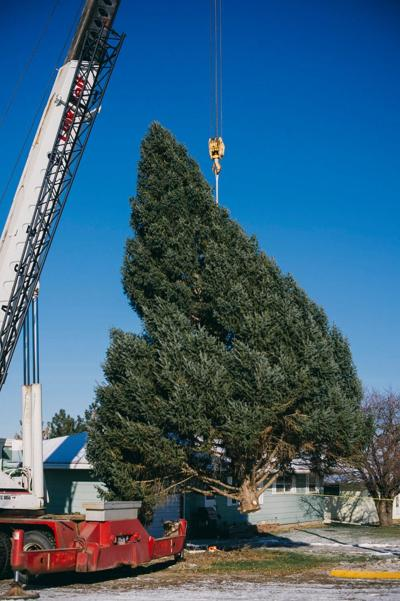 With the assistance of a crew of sawyers from SDSU and a crane courtesy of AGE, the 2020 Capitol Christmas Tree was freed from its trunk. For close to half a century, the tree has been a fixture at the corner of Main and Hawthorn in Onida. It is slated to be decorated in celebration of this year's Christmas at the Capitol theme - 'The Year of the Nurse.'