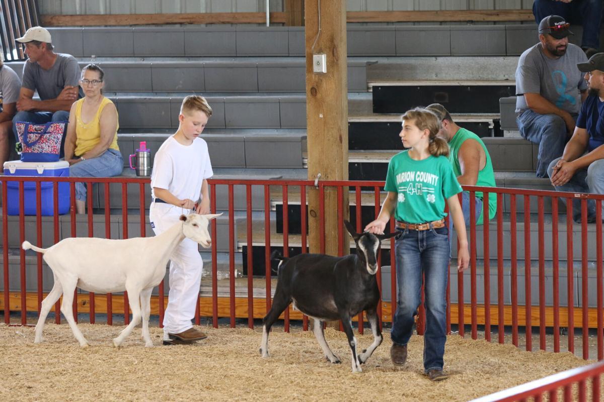 Marion County Fair 2