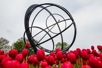 Fall tulip bulb planting begins in Pella