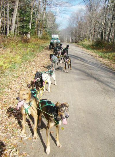 Lacona's Roy Smith brings dogsledding back to Oswego County