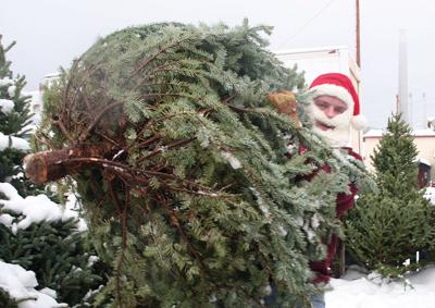 Local Christmas tree farms get ready for busy season