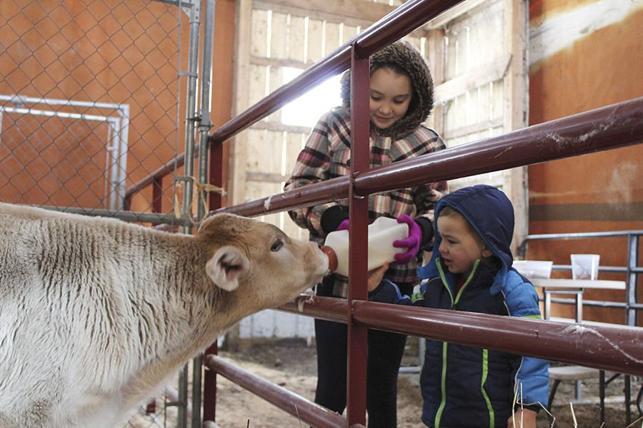 Much more than syrup at Maple Hollow Farm
