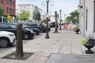 Tree removal sparks controversy