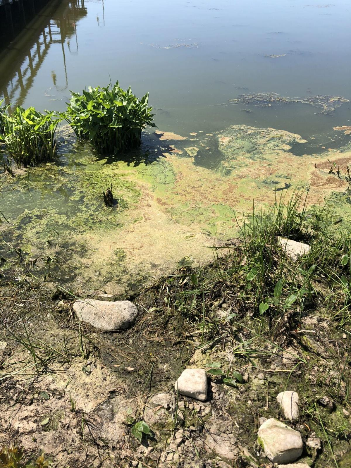 Lake Neatahwanta HAB