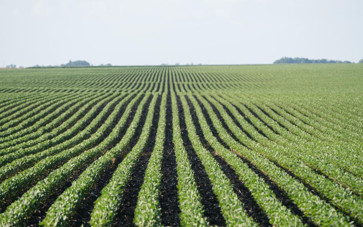 Soybean exports photo