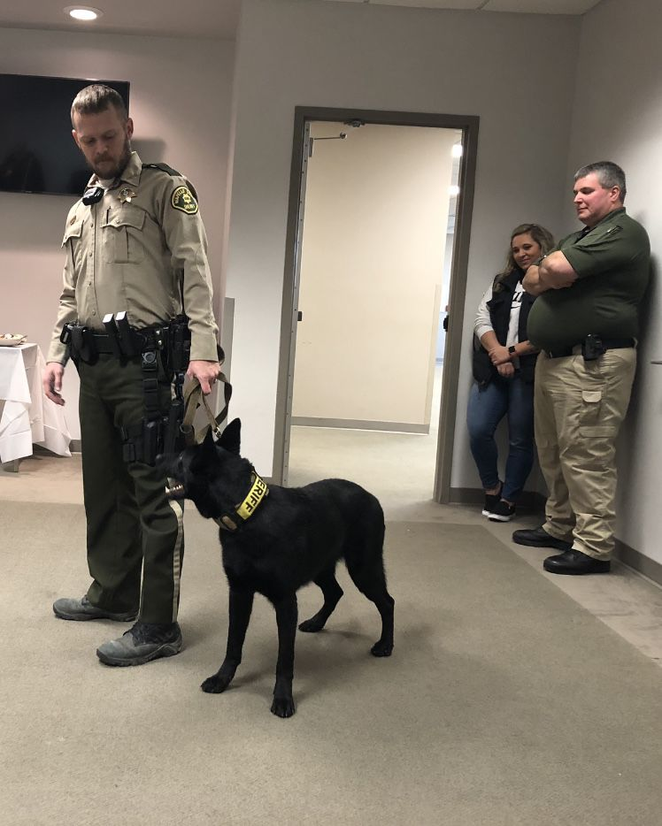 County Canine