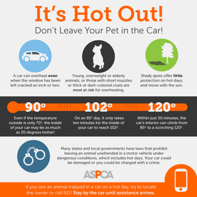 Statistics on pets in hot cars