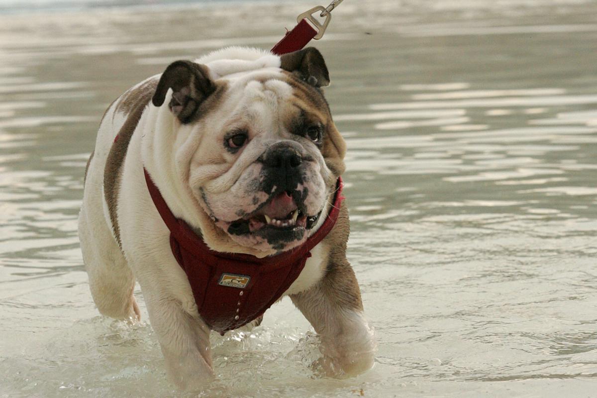 Dog Paddle News Ottumwacourier Com