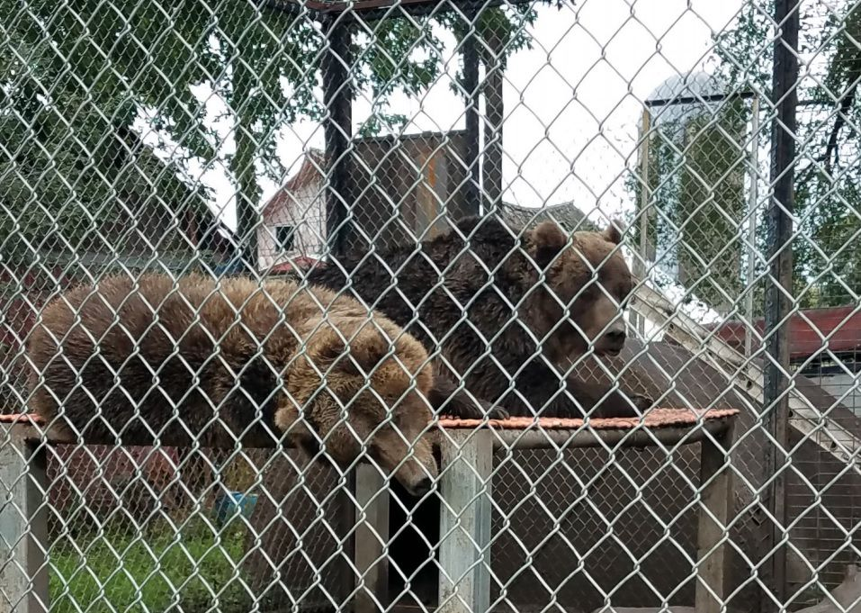 Zoo-Bears.jpg