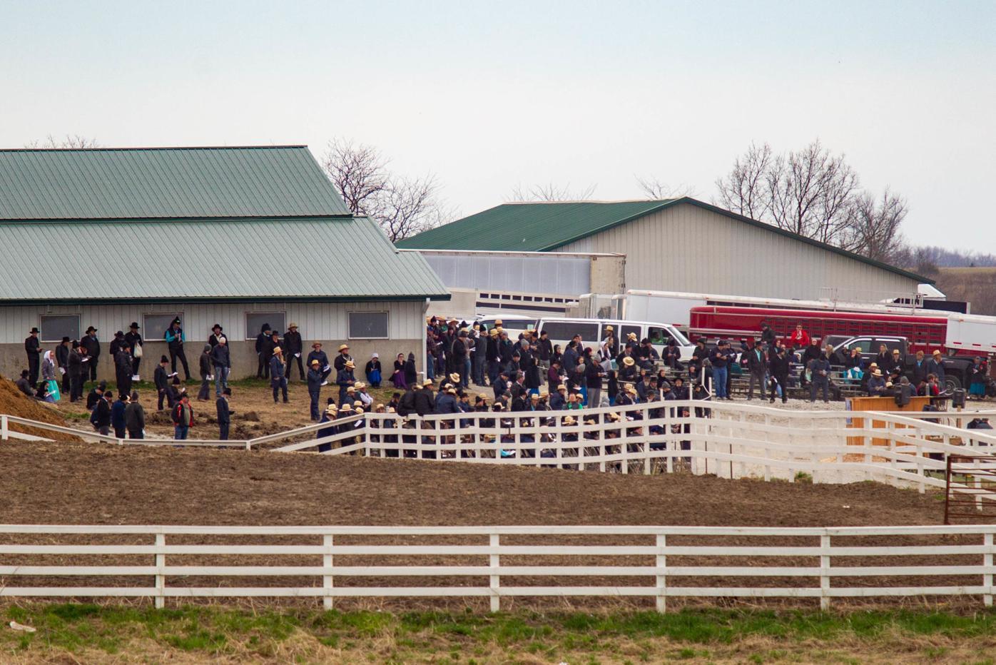 Seymour horse auction