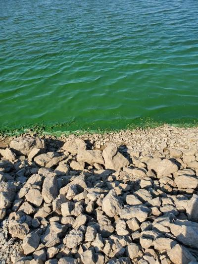 Rathbun Lake algae
