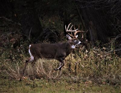 LBL deer