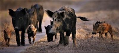 Feds take bite out of LBL hogs, but long haul looms