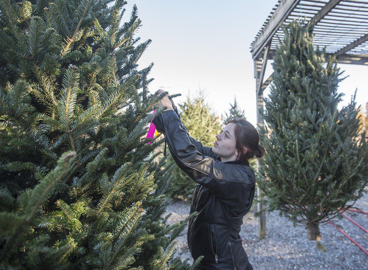 tight christmas tree market is blamed on 2007 recession - Rural King Christmas Decorations