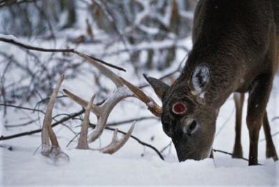 Buck lost one antler