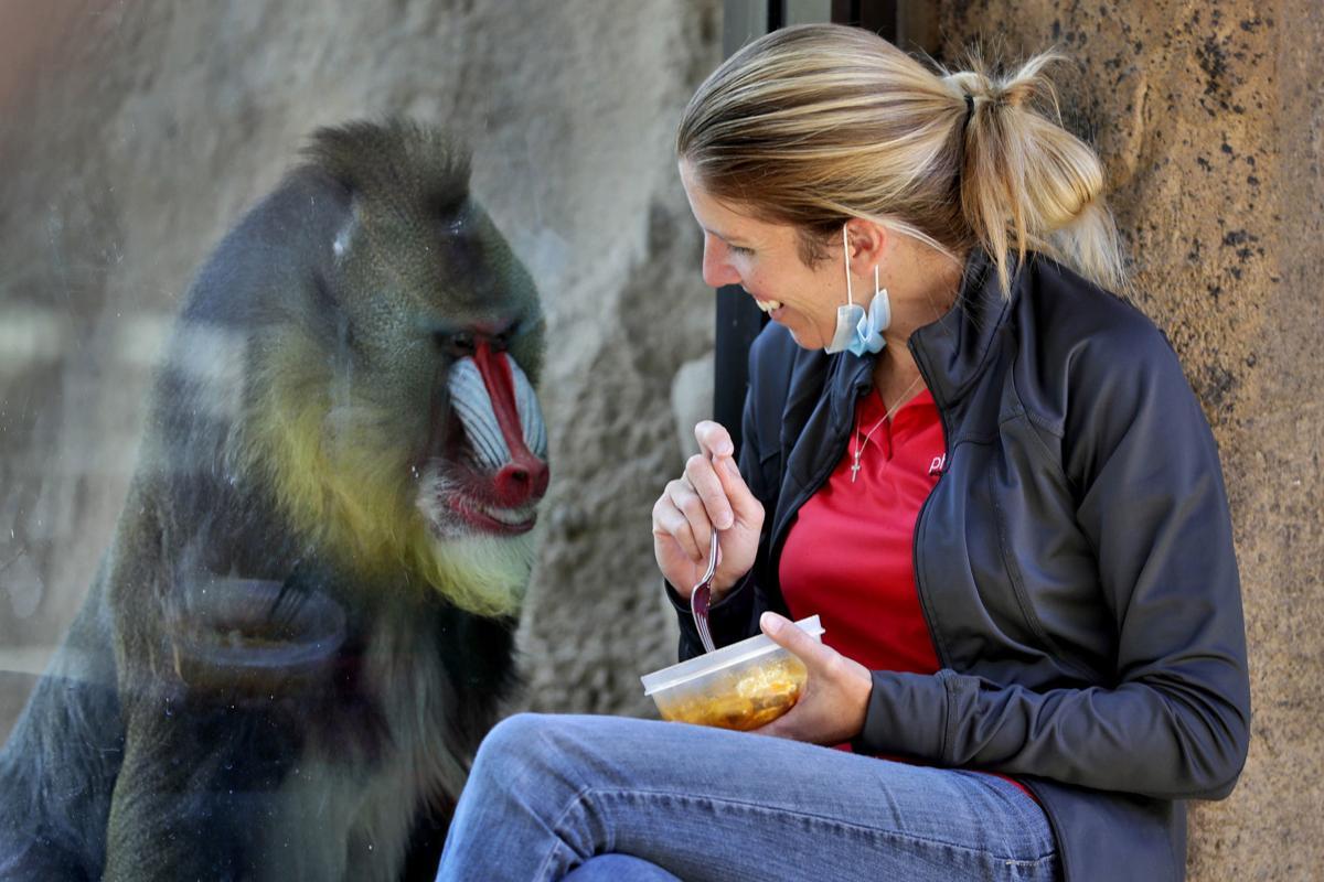 Exchange Virus Zoo Animals