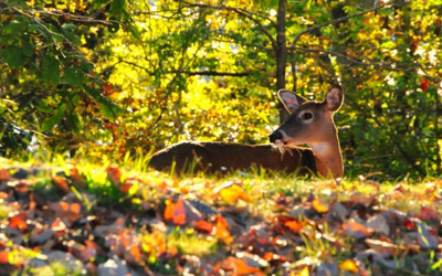 Hunters sizing up CWD precaution restrictions