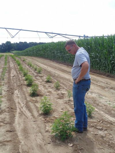 Farmers note risk, rewards as hemp planting nears