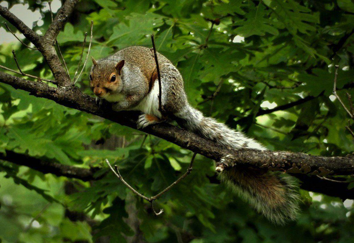 Next week, Kentucky's squirrel season starts march to fall