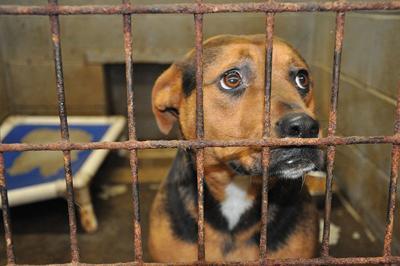2-8 Animal Shelter.jpg