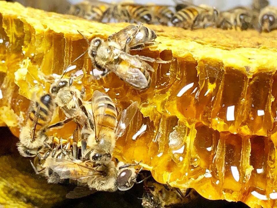 6-13 Bee Man (1).jpg