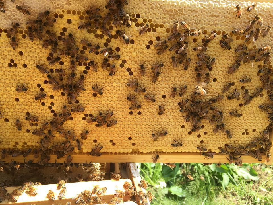 6-13 Bee Man (2).jpg