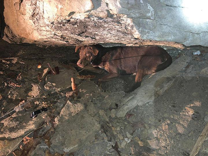 11-16 Rescuer - Dog.jpg