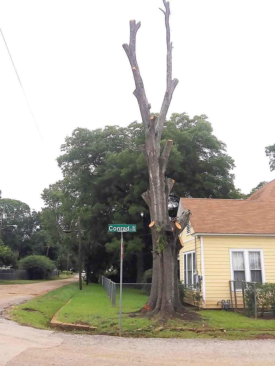 06-27 tree-01