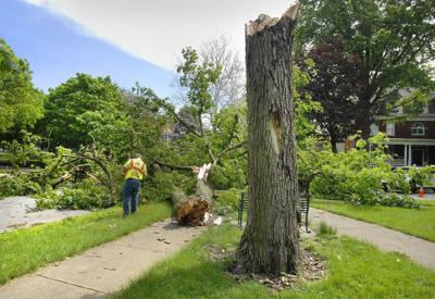 Bloomington, Normal crews busy after spring hammers trees