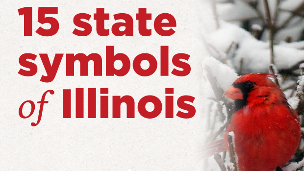 get to know illinois 15 state symbols state and regional
