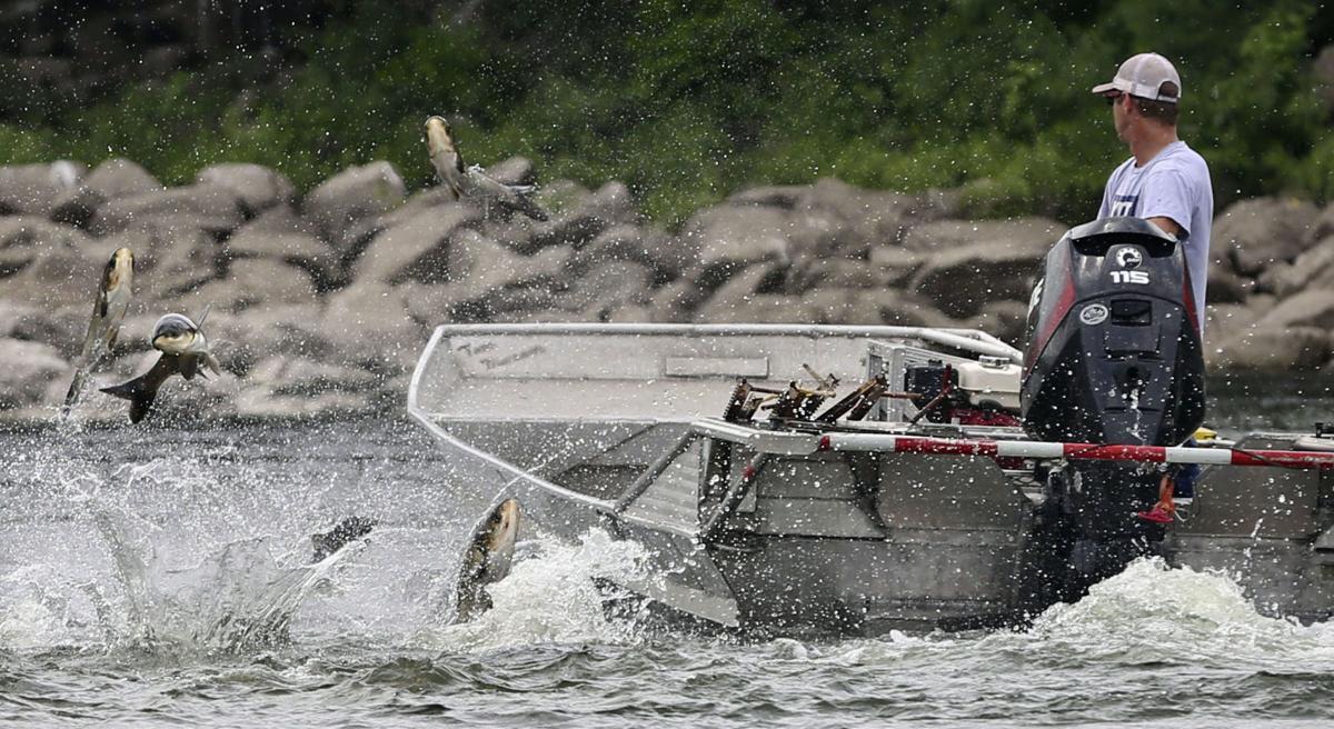 Asian carp - file photo