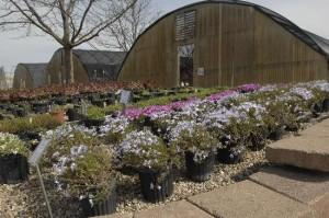 Dozens of Plants & Shrubs to choose from!