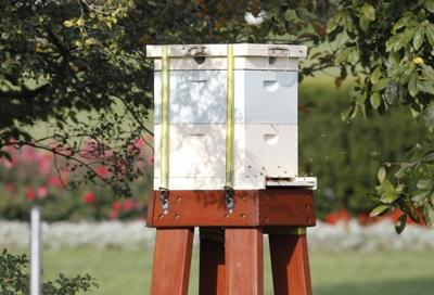 White House beehive