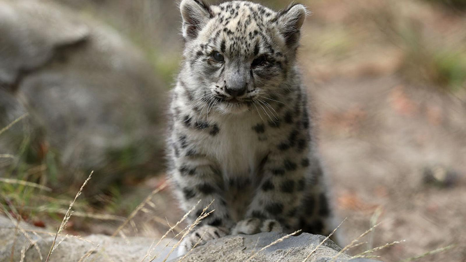 10 previously endangered animals that have evaded extinction