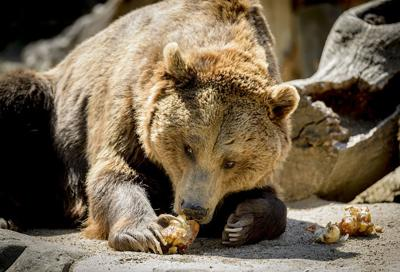 Husband and wife recall grizzly bear ordeal that cut short canoe trip through the Canadian tundra
