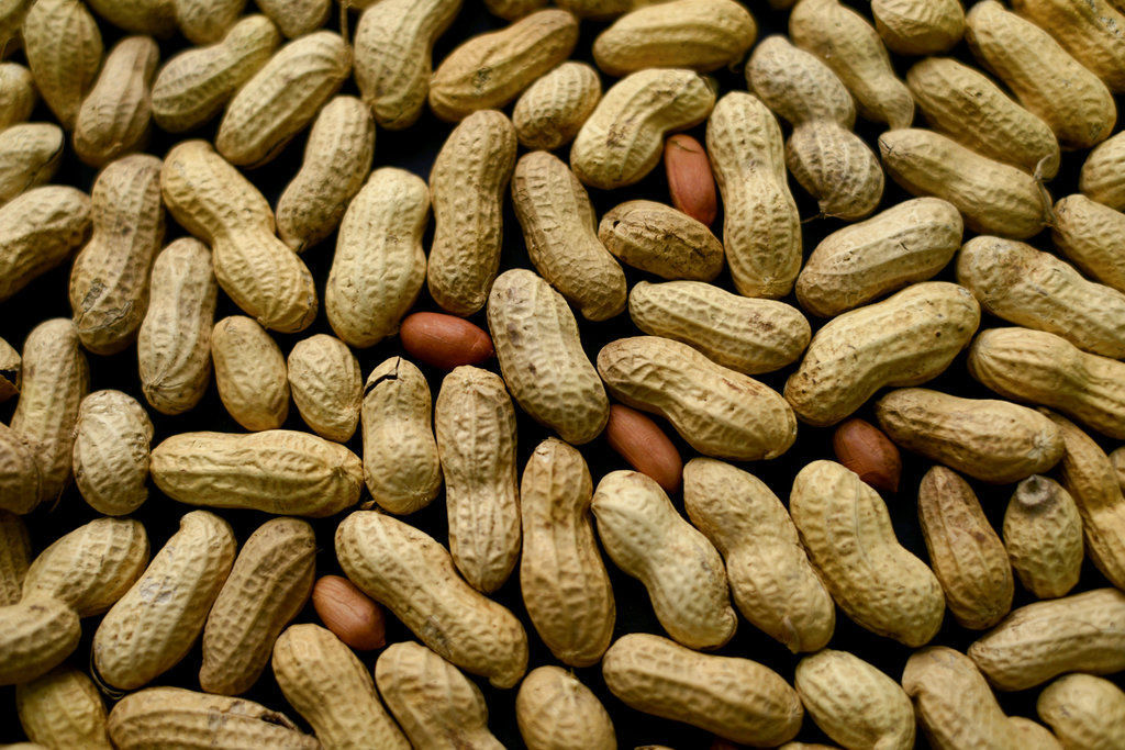 Peanut Allergy Treatment