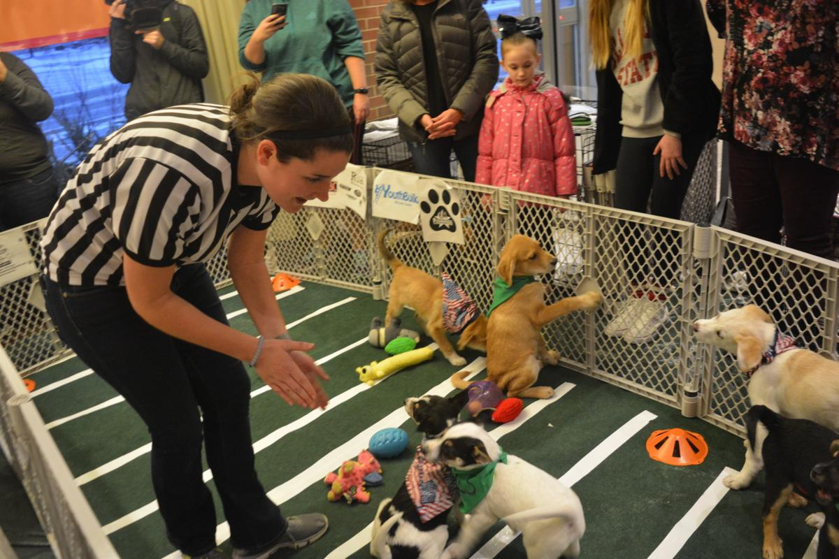 Dog Lovers No Losers In Puppy Bowl Local News Pantagraphcom