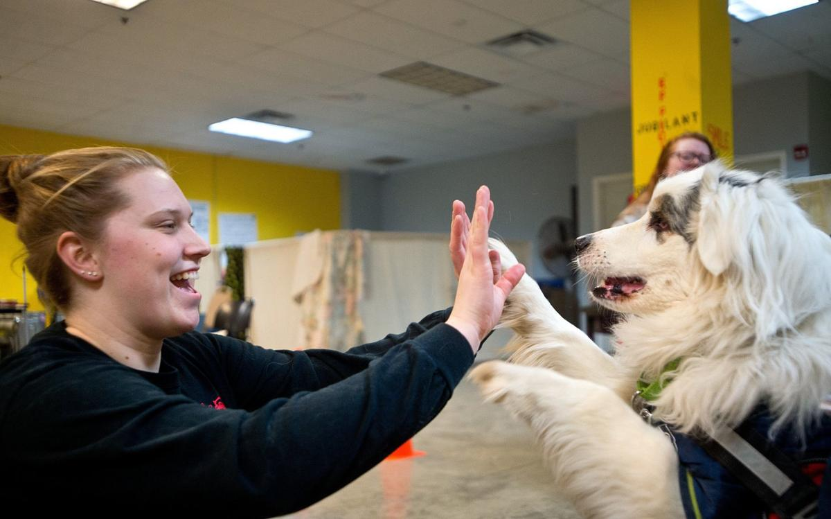 Social skills: Dogs, psychology students learn from each