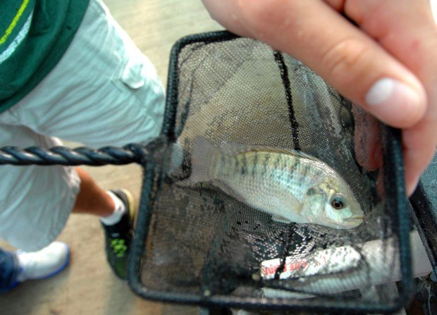 4fbdbaecf028a.preview 620 - Students Raise Fish for Cafeteria