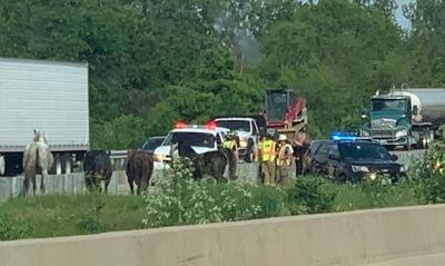 Horses on I-74 near Downs