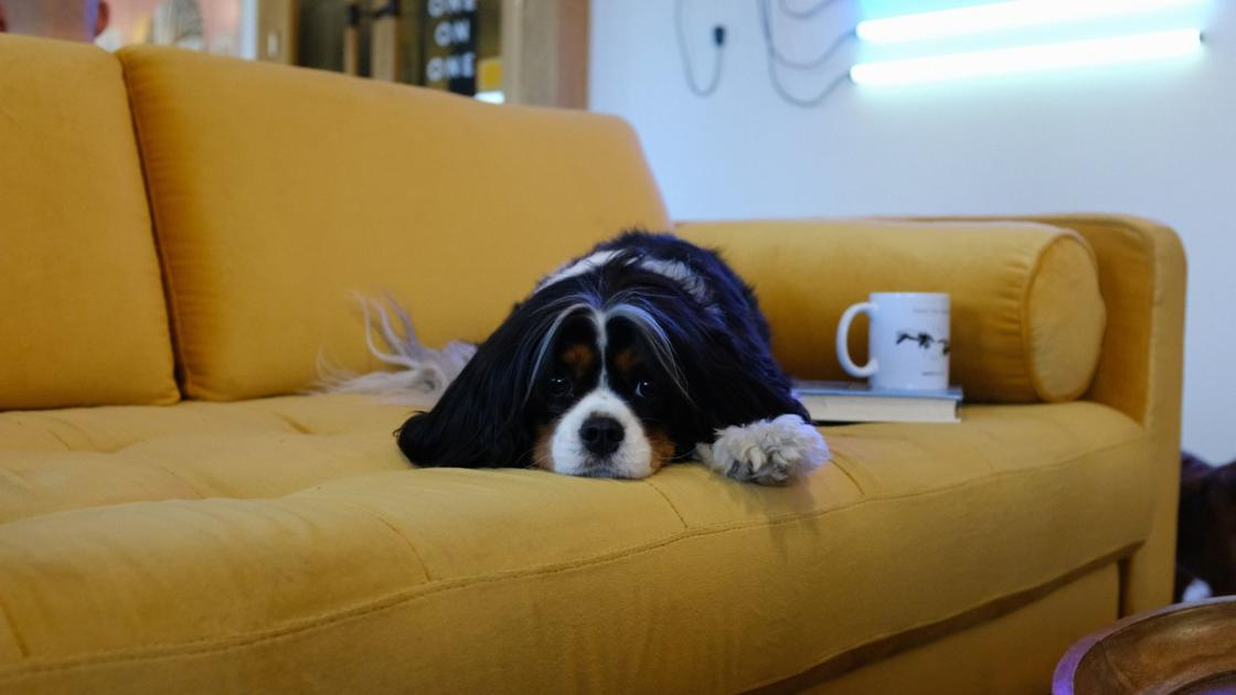 Cooped up with your canine: Here are indoor activities to keep pup busy